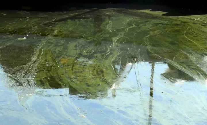 Sinilevää on havaittu Suomen järvillä ja merialueilla vain muutamalla havaintopaikalla ja pieniä määriä. LEHTIKUVA / Jussi Nukari