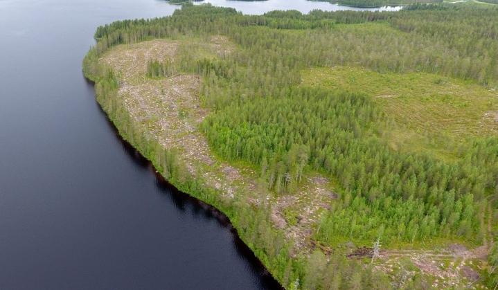 Metsähakkuualue rannan tuntumassa Piispajärvellä Suomussalmella. LEHTIKUVA / VESA MOILANEN
