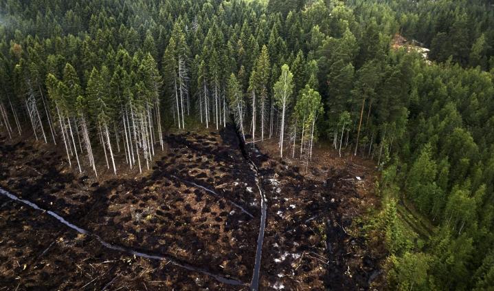 Metsiin liittyvät maininnat jakoivat näkemyksiä parlamentin käsittelyssä. Kuvassa avohakkuualue Lohjan Karjalohjalla. LEHTIKUVA / RONI REKOMAA