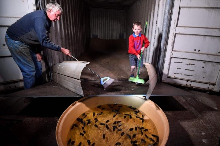 Tink yrittää tappaa hiiriä lakaisemalla niitä harjalla suoraan suureen vesiastiaan, johon jyrsijät hukkuvat. LEHTIKUVA / AFP