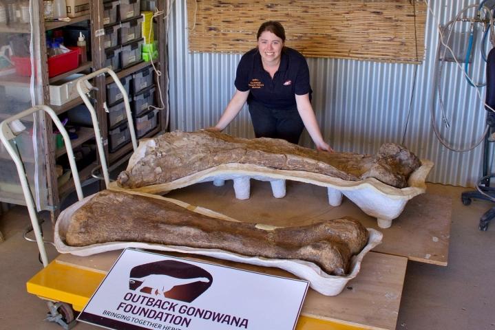 Syrjäisestä Australiasta löytyneiden luiden arvoitus on viimein selvinnyt: kyse on uudesta dinosaurus-lajista, ja vieläpä yhdestä suurimmista, joka on koskaan Maan päällä kulkenut. LEHTIKUVA/AFP