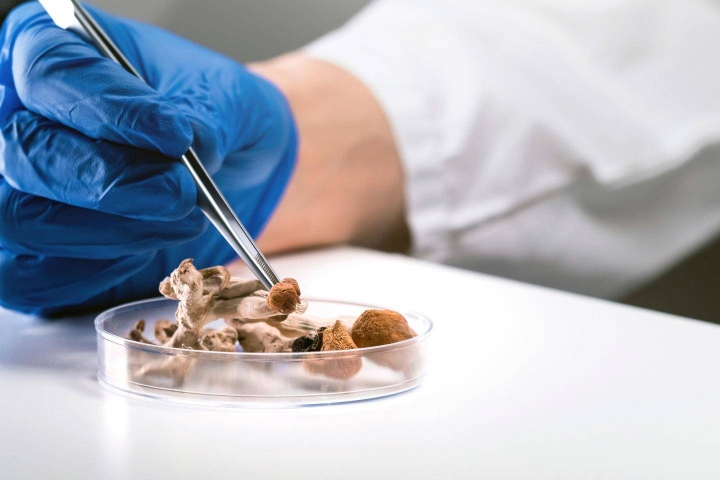Psilosybiinia esiintyy tietyissä sienilajeissa, joita on käytetty muun muassa uskonnollisissa rituaaleissa. Aineen eristi ensimmäisenä sveitsiläinen kemisti Albert Hofmann vuonna 1958. Hänet tunnetaan myös LSD:n kehittäjänä.