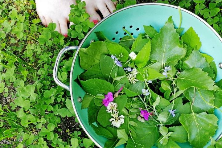 Kerää koti- tai mökkikylpyä varten pihalta kasveja, jotka tunnet ja jotka eivät ole rauhoitettuja.
