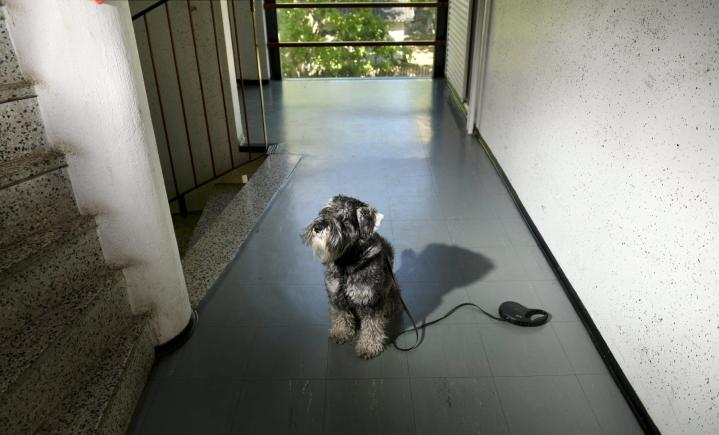 Pariskunnan tapauksessa molemmilla on usein yksi kokonainen koira yhteisenä, mutta erotessa tilanne saattaa mutkistua.  LEHTIKUVA / HEIKKI SAUKKOMAA