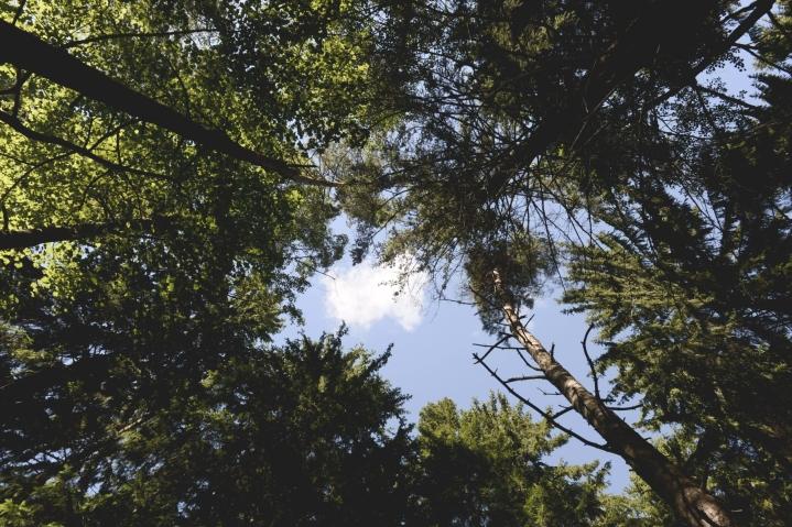Metsiin liittyvät ilmastotoimet ovat herättäneet Suomessa paljon keskustelua ja eripuraa hallituksen sisällä.  LEHTIKUVA / OLIVIA RANTA