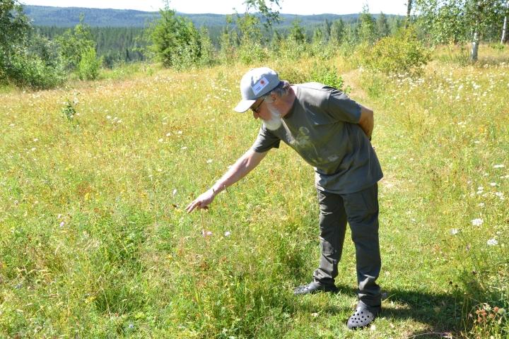 Raimo Kitunen hoitaa pörriäisniittyään niittämällä sen kesän lopussa ja korjaamalla niittojätteen pois.