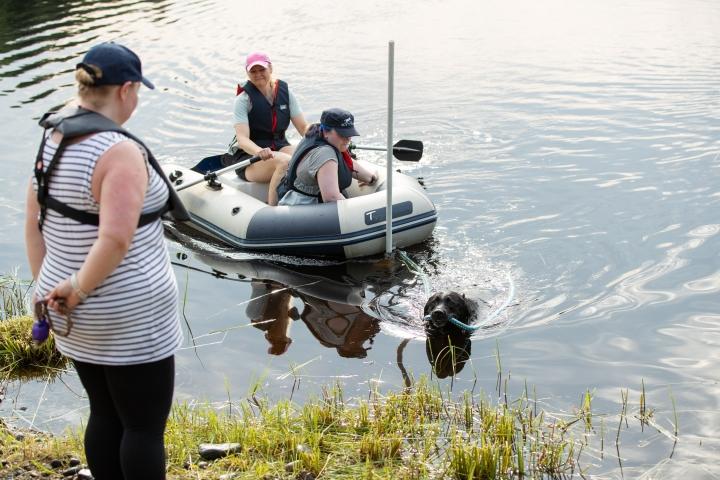 Labradorinnoutaja Huima vetää veneen rantaan. Kyydissä Leena Vartiainen (soutaja) ja Anni Rask. Rannalla seisoo Virve Taivainen.