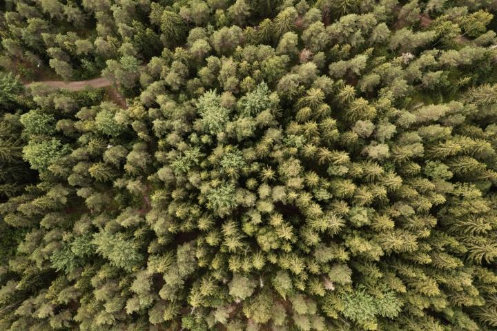 Metsäteollisuus pitää kokonaisuutta monella tapaa ongelmallisena suomalaiselle teollisuudelle. LEHTIKUVA / RONI REKOMAA