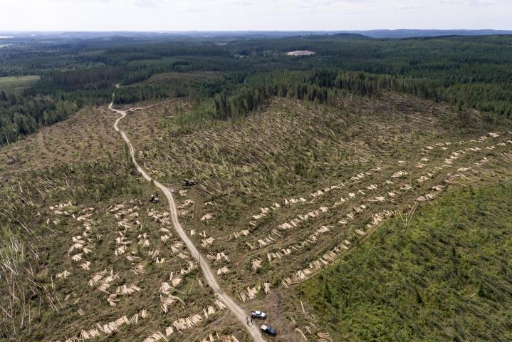 Juhannuspäivän syöksyvirtaus vei yli sadan hehtaarin alueelta metsää mennessään.