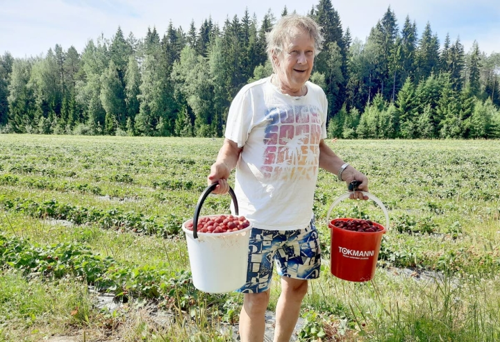 Helteestä huolimatta Erkki Jalovaara aikoo kerätä vaimonsa kanssa mansikoita vielä toisen mokoman.