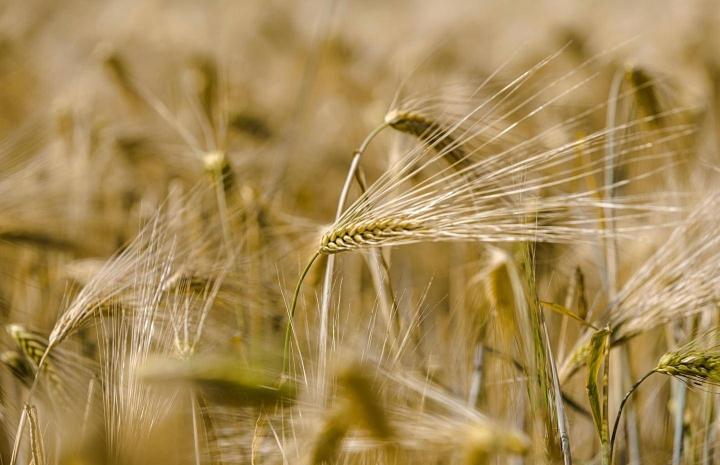 Asiantuntijoiden mukaan maatilojen olisi hyvä ottaa viljelyyn sekä keväällä kylvettäviä että syksyllä kylvettäviä kasveja. Ohra kylvetään keväällä ja korjataan saman vuoden syksyllä.