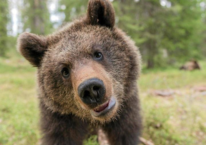 Kuvauskojusta kuvattu karhun poikanen.