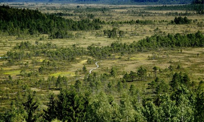 Suot ovat Euroopan luontotyypeistä uhanalaisin, ja Suomella on erityisvastuu soiden suojelusta. LEHTIKUVA / RONI REKOMAA