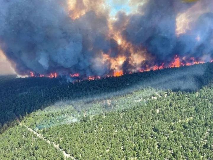 Brittiläisen Kolumbian provinssin pääministeri John Horgan kertoi, että alueella oli vuorokauden aikana havaittu yli 60 uutta maastopaloa. Kuva otettu 29. kesäkuuta. LEHTIKUVA/AFP PHOTO/BC Wildfire Service