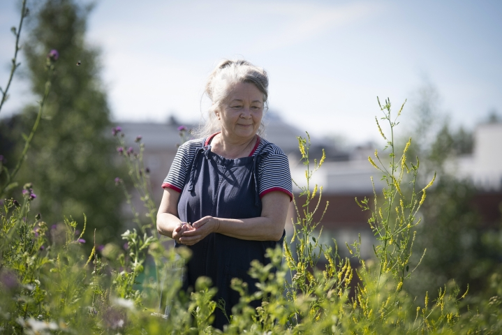 Ulla Lapiolahti on luonnonvärjäreiden yhdistyksen, Värjärikillan, palkitsema Vuoden Värikäs 2021. Hän on tehnyt pioneerityötä luonnonvärien parissa ja ollut myös perustamassa Värjärikiltaa.