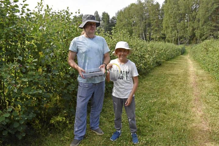 Andrey Rusanovich ja 9-vuotias Alex-poika tulivat Espoosta asti keräämään itsepoimintana saskatoonia omaan käyttöön. Marja maistuu heille sellaisenaan sekä piirakassa.
