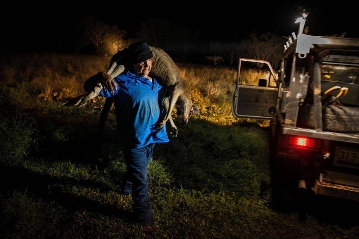 Ian White, ammattimetsästäjä kolmannessa polvessa, kantaa ampumaansa kengurua Suratissa, Australiassa.