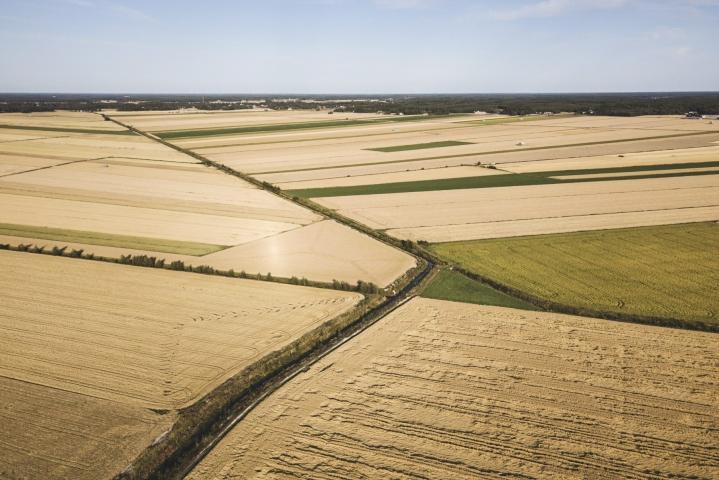 MT:n mukaan alhainen fosforimäärä vaikeuttaa muun muassa kasvien kasvuun lähtöä ja heikentää satonäkymiä. LEHTIKUVA / Roni Rekomaa