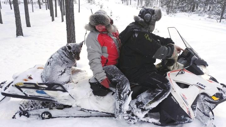Lapinporokoira Skaike avustaa emäntäänsä Hanna-Riikka Kuhmosta poronhoitotöissä. Porokoiran turkki on Lapin sääolosuhteisiin täydellinen, koira ei palele pakkasessa eikä viimassa.
