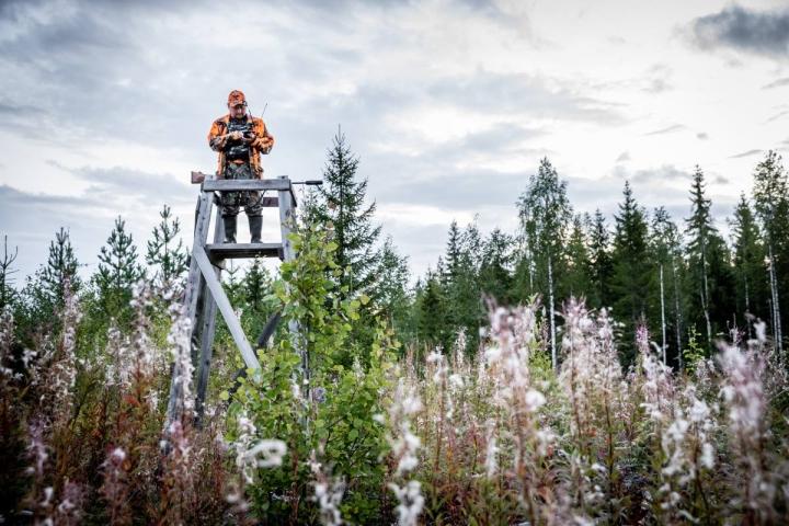 Lauantaina Pohjois-Karjalassa kaatui iltaan mennessä 15 karhua. Manu Soininmäki osallistui jahtiin viime vuonna Ilomantsissa.