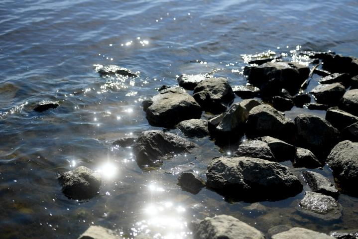 Sinilevätilanne on rauhallinen järvillä ja rannikko- ja avomerialueilla. Arkistokuva. LEHTIKUVA / Silja-Riikka Seppälä