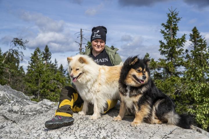 Suomenlapinkoira on ketterä ja säänkestävä retkeilykaveri. Henna-Riikka Backman käy koiriensa kanssa usein Kolilla.