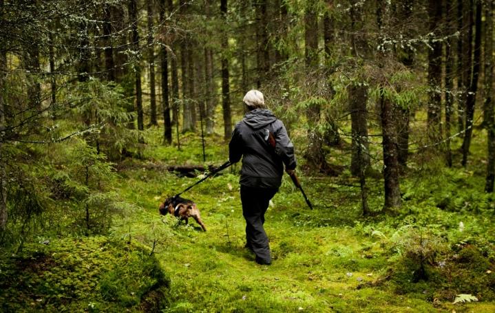 Koiravahinkotapauksia kirjataan Suomessa keskimäärin 30–50 vuosittain. LEHTIKUVA / RONI REKOMAA