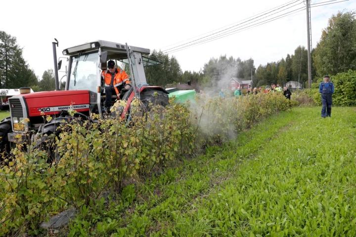 Jouni Mutanen testaa uutta kuumaan veteen perustuvaa rikkakasvien poistolaitetta mustaherukkapensaidensa juureen.