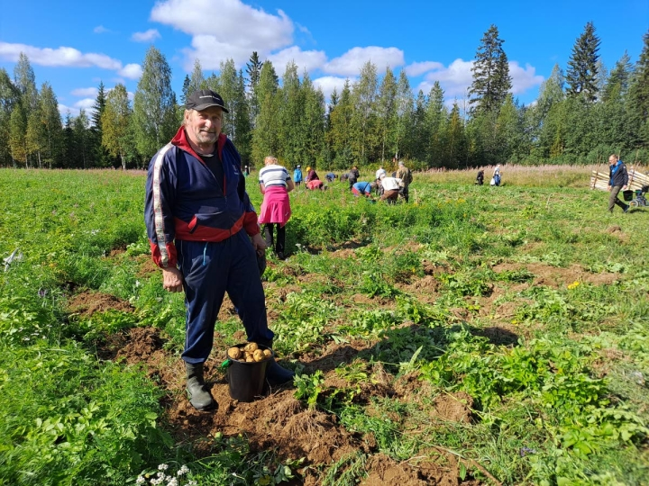 Verkkojoella asuva maanviljelijä ja taksiautoilija Veijo Karppinen oli myös keräämässä perunoita hvyäntuulisena.