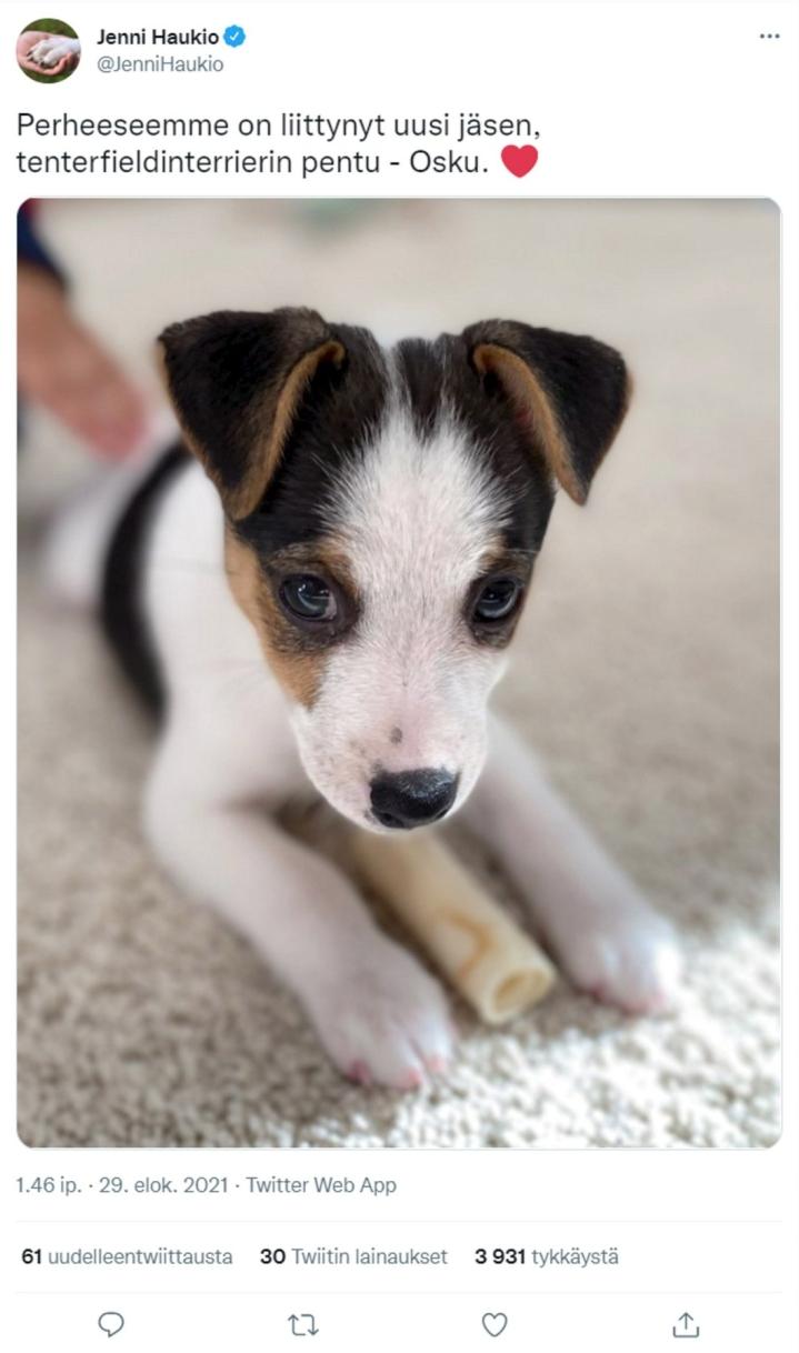 Jenni Haukio esitteli presidenttiparin uuden koiran Twitter-tilillään. Lehtikuva