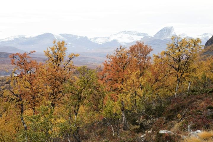 Ruskan värejä luonnossa Mallan luonnonpuistossa 12. syyskuuta. LEHTIKUVA / RONI REKOMAA