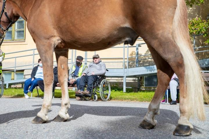 Suomenhevonen nimeltään Rantalan Severi vieraili maanantaina Kontiolinnan pihassa tervehtimässä hoivayksiköiden asukkaita. Entinen hevosmies Viljami Hakkarainen viihtyi suurta hevosta katselemassa, ja muistoissa kulki oma, Sopu-niminen suomenhevonen.