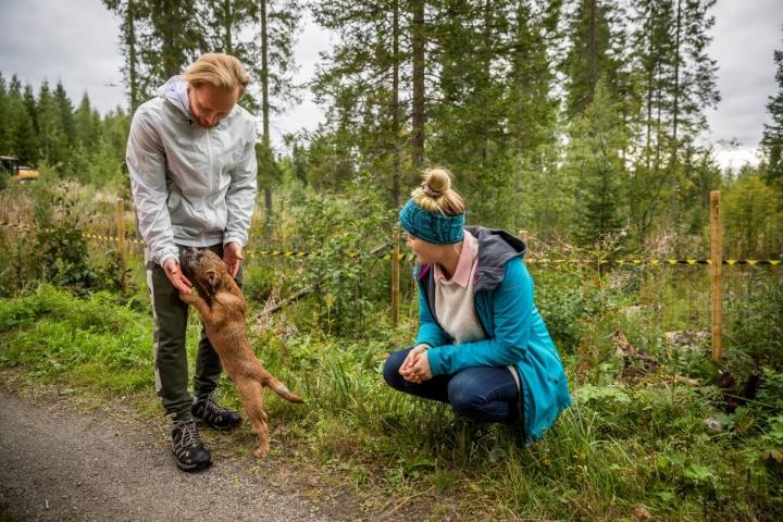 Koiranpuron yrittäjät Matti Lindholm ja Essi Marttila saivat idean koirametsästä, kun he tarvitsivat omille koirilleen paikan, jossa voi juosta vapaasti. Kuvassa Lindholmia vasten hyppii koirametsän vakikävijän Hanna Ripatin nelikuinen Karpo-pentu.