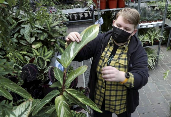 Sofia Lietolahti neuvoo tarkistamaan huonekasvien alapinnat tuholaisten varalta, jos kasveihin ilmestyy ruskeita laikkuja tai muuta poikkeavaa.