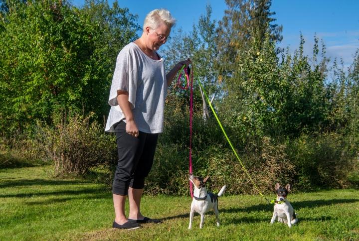 Jyväskylän Nyrölässä asuva Sari Harjunen kasvattaa tenterfieldinterrierejä ja omistaa niitä yhdessä Jaana Immonen-Sillan tien kanssa kolme. Kuvassa kaksivuotias Pinni ja sen viimekeväinen pentu Hulda.