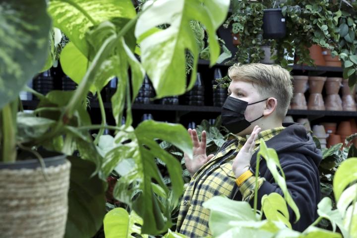 Tällä hetkellä erilaiset kirjavat kasvilajikkeet ovat pinnalla. Sofia Lietolahden mukaan suosituimpia ovat selkeästi kuvioidut, valkoraitaiset kasvit.
