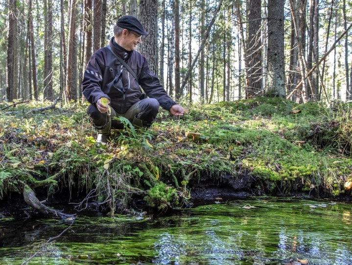 Paskolähteenpuron luonnontilaisella osalla on taianomainen röllimetsätunnelma. Ympäristöpäällikkö Antti Suontama löytää rantamilta muun muassa suo-orvokkia ja vehkoja.