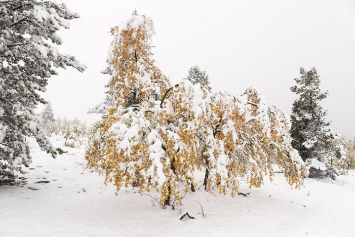 Maan pohjoisosassa on loppuviikolla syytä varautua lumisateisiin. Kuva Pallas-Yllästunturin kansallispuistosta 13. syyskuuta. LEHTIKUVA / Roni Rekomaa