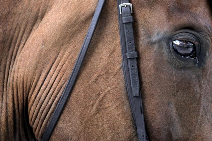 Etelä-Suomen aluehallintoviraston valvontakäynneillä 58 prosentilla hevosista esiintyi suuvaurioita kuolainten vaikutusalueella. Kuvituskuva. LEHTIKUVA / JUSSI NUKARI
