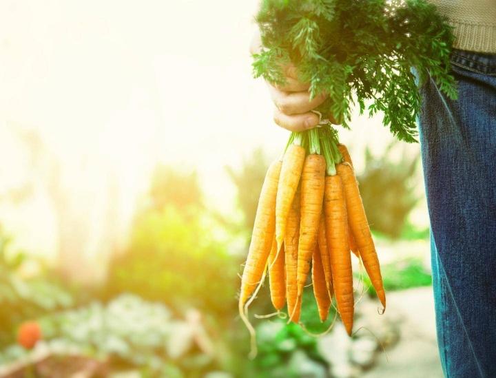 Koronakriisi on kasvatti voimakkaasti luonnonmukaisten elintarvikkeiden kysyntää. Esimerkiksi Saksassa luomuelintarvikkeiden myynti nousi viime vuonna 22 prosentilla yltäen 15 miljardiin euroon.