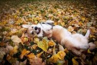 Myös koiralla voi olla ADHD – yksinäiset nuoret uroskoirat kärsivät keskittymiskyvyttömyydestä eniten