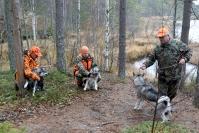 """Sudet tappaneet jo ainakin neljä koiraa Lieksassa syksyn aikana, ja metsästys on hankaloitunut –""""Haukkuva koira on sudelle kuin ruokakello"""""""