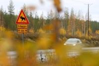Auto törmäsi hirveen Kajaanintiellä lauantaina iltapäivällä