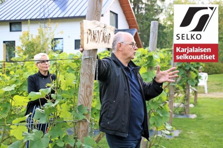Anna-Maija Harikoski ja Juha Quist työskentelevät viinitarhallaan joka päivä. Viinirypälesato alkaa kypsyä syyskuussa.