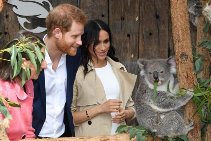 Harry ja Meghan pääsivät ihastelemaan koalaa lähietäisyydeltä. Lehtikuva / AFP