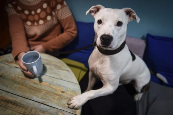 Tämä koira vieraili kahvilassa Helsingissä viime viikolla. LEHTIKUVA / EMMI KORHONEN