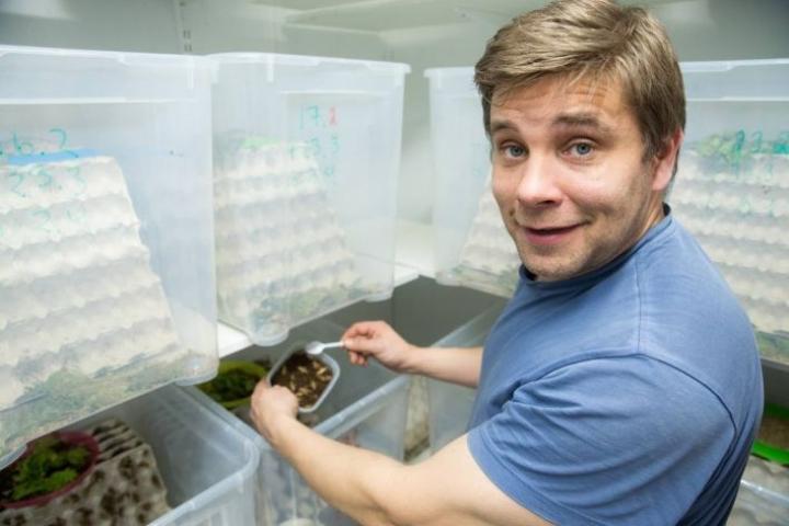 Hermanni Nieminen kasvattaa kotisirkkoja tilallaan Joensuun Iiksenniityllä. Monet kasvissyöjät ovat huomanneet hyönteissyönnin edut.