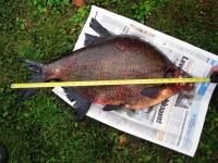 Karjalaisen kalakilpailu on jälleen käynnissä - jätä tiedot saaliistasi