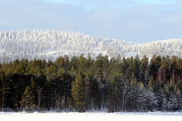 Uudella musiikkivideolla nähdään muun muassa Kolin maisemia.