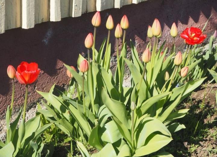 Kukat olivat heränneet loistoonsa aurinkoisen ja melko lämpimän sään ansiosta 23. toukokuuta.